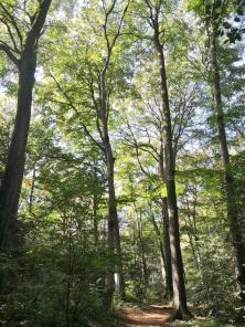 Noch ist im Wald vom herannahanden Herbst nichts zu erkennen
