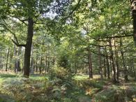 Üppig grünt es im Wald