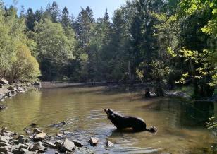 Doxi stärkt sich am See in einem ehemaligen Steinbruch nebem dem Vennbahnradweg