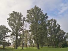 Niederung am Jüchener Bach bei Aldenhoven