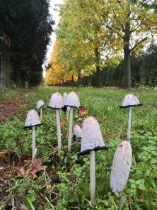 Pilze in einer Baumschule zwischen Büttgen und Holzbüttgen