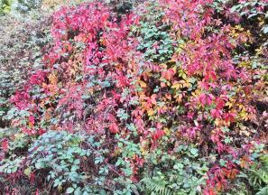 Langsam kommt die Herbstfärbung in Gang