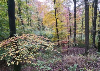 Der Wald auf den Wupperhängen zeigt sich in seinem bunten Herbstkleid