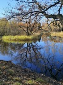 Malerisch spiegelt sich der Baum im Wasser