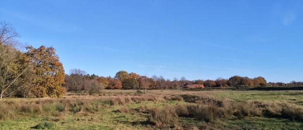 Weideflächen auf der niederländischen Seite der Schwalm