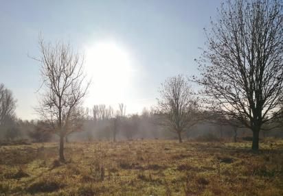 Wildrinder auf den Wiesen an der Erft hinter der Museuminsel Hombroich