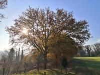 Herrlich, wie die Sonne die Bäume flutet