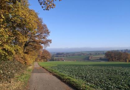 Im Hintergrund sieht man die dicke Nebelwand, die über dem Rheinland liegt