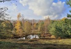 Hinten am Waldrand erstreckt sich die Deutsch-Niederländische Grenze