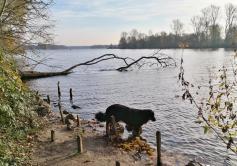 Doxi testet die Wasserqualität des Unterbacher Sees