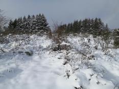 Hier liegt noch ordentlich viel Schnee