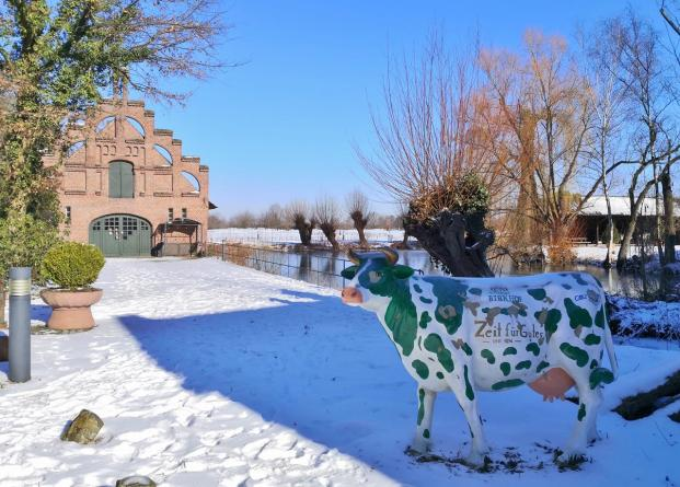 Kuh vor Kopfweiden - ein gewohntes Bild am Niederrhein