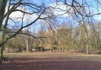 Dammwild im Reuschenberger Park