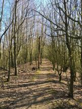 Waldfläche auf der Gustorfer Höhe