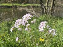 Wildblumen am Rurufer