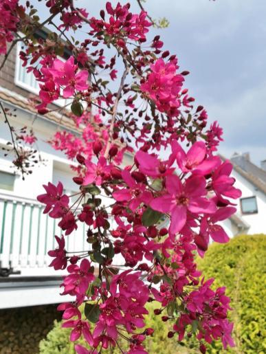 Wunderschöne Frühlingsblüte