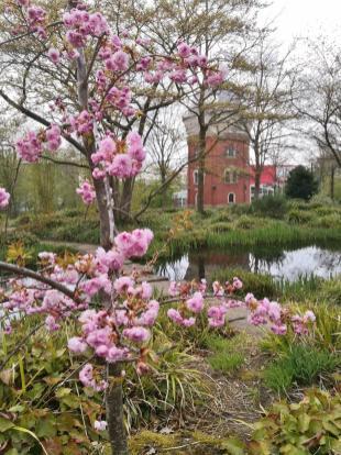 Kirschblüte im Park der ehemaligen Landesgartenschau MüGa