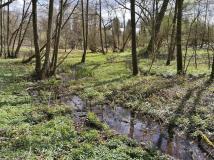 Feuchtgebiet im Forstbacktal