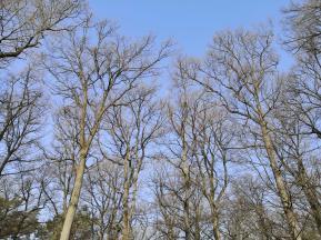 Noch sind die Bäume unbelaubt