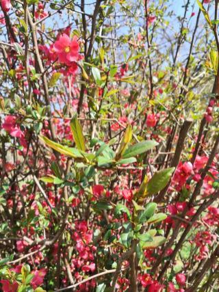 Hübsche Blüte in Odenthal