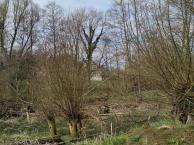 Schwarzbachauen an der alten Grevenhauser Mühle