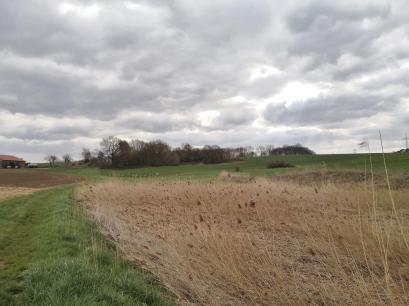 Feuchtgebiet am Metzkesberg