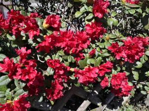 Herrliche Frühlingsblüte in Stumpf