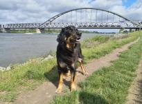 An der Hammer Eisenbahnbrücke