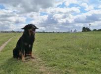 Auf den Rheinwiesen am Rheinknie: Der starke Wind hebt Doxis Ohren an