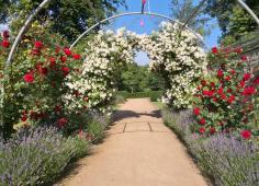 Rosenspalier am Knotengarten