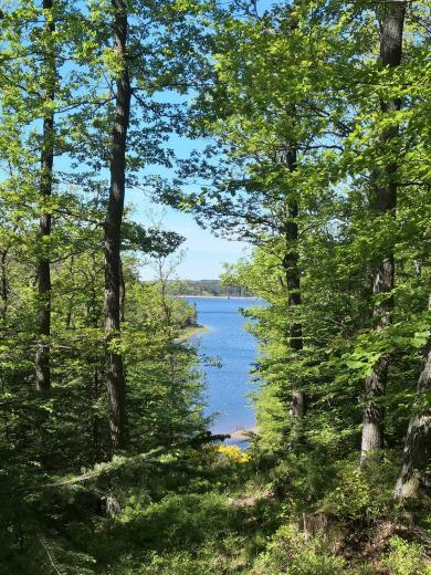 Blick duch den Wald auf die Dreilägerbachtalsperre