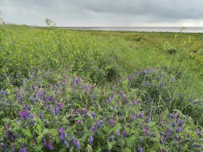 Wildblumen an der Uferkante