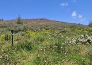Wildblumen am Hang des Aussichtshügels