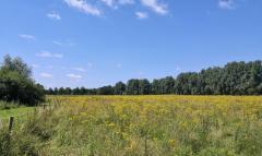 Weiden am Rand des Rodebachs
