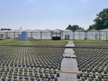 Viele Gartenbaubetriebe sind in der Region zu Hause