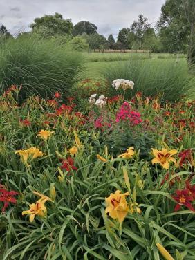 Hübsche Blumen im Salinenpark