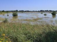 Überschwemmtes Deichvorland