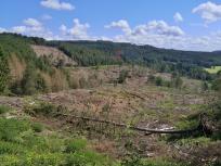 Freigeräumte Waldflächen oberhalb der Agger