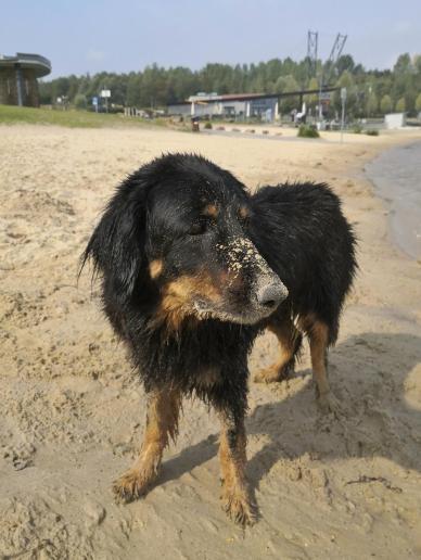 Doxi hat sich nach dem Baden schön im Sand gewälzt