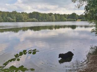 Doxi testet die Wasserqualität des Uettelsheimer Sees