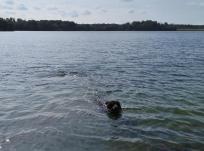 Doxi schwimmt im Angermunder See