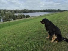 Blick zum Polder Hasenfeld