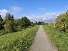 Wir verlassen den Rheindeich und umrunden den Polder Hasenfeld