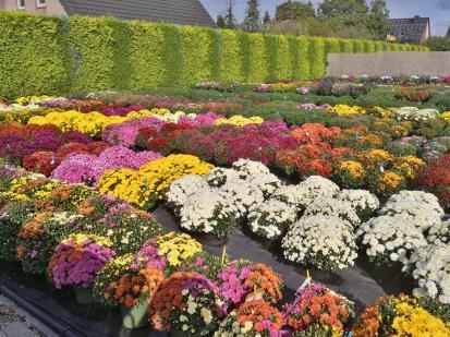 Gesehen an einem Gartenbaubetrieb in Drießen