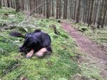Wenn Doxi auf weichem Waldboden liegt und ein Stöcken knackt, ist ihre kleine Welt in Ordnung