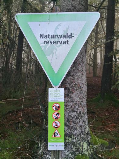 """Die Traumschleife """"Gipfelrauschen """" führt durch das Naturreservat auf dem Gipfelkamm"""