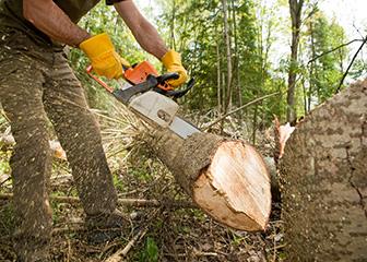 Timber Faller Salary