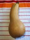 butternut kabocha squash