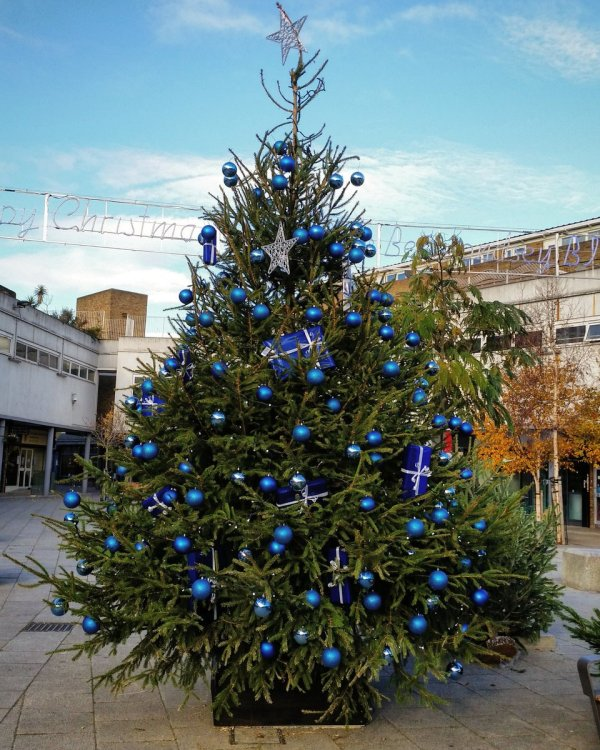 Christmas Tree At Market Place in the Blue