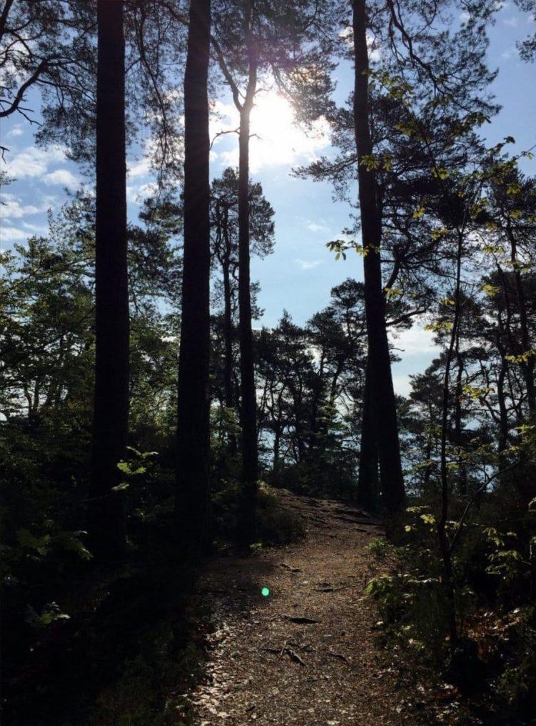 Die Sonne scheint auf den Dahner Felsenpfad